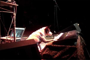 laurie-anderson-heart-of-a-dog-2